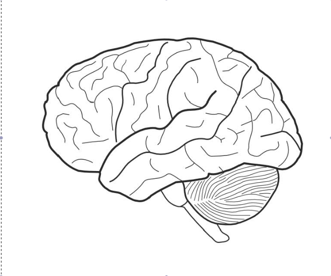 This is a photo of Gorgeous brain coloring pages